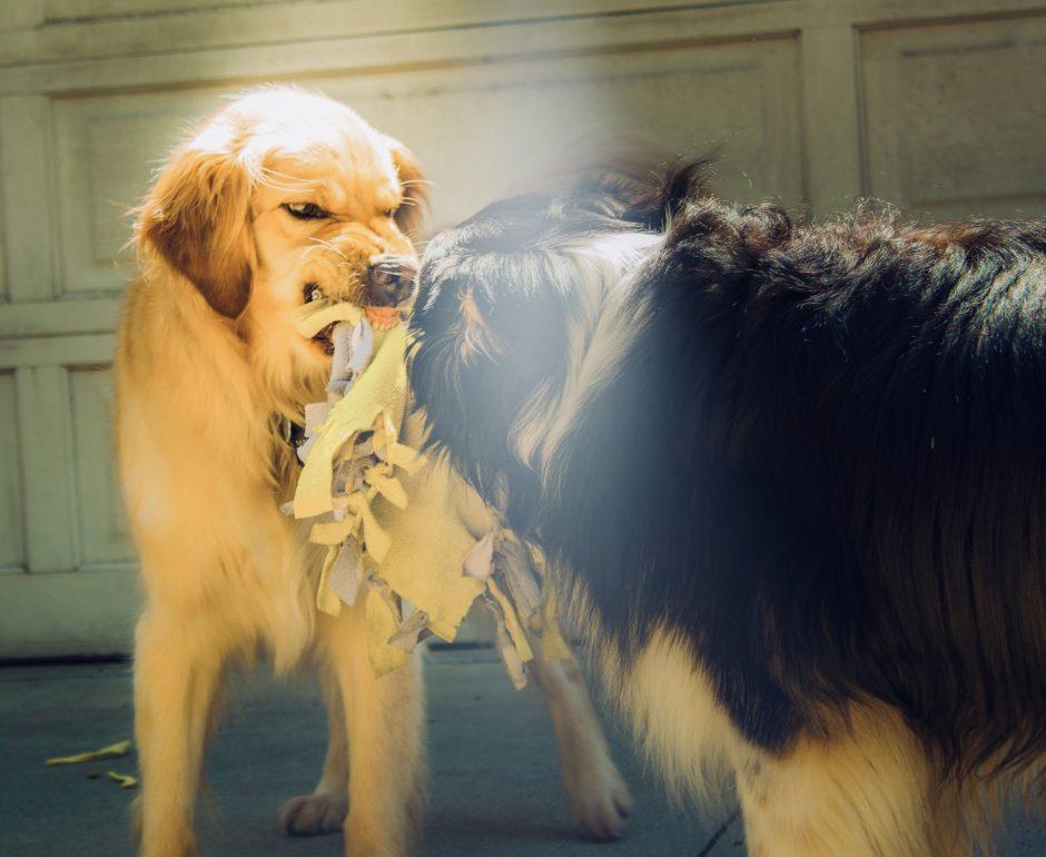 豊橋 狂犬病